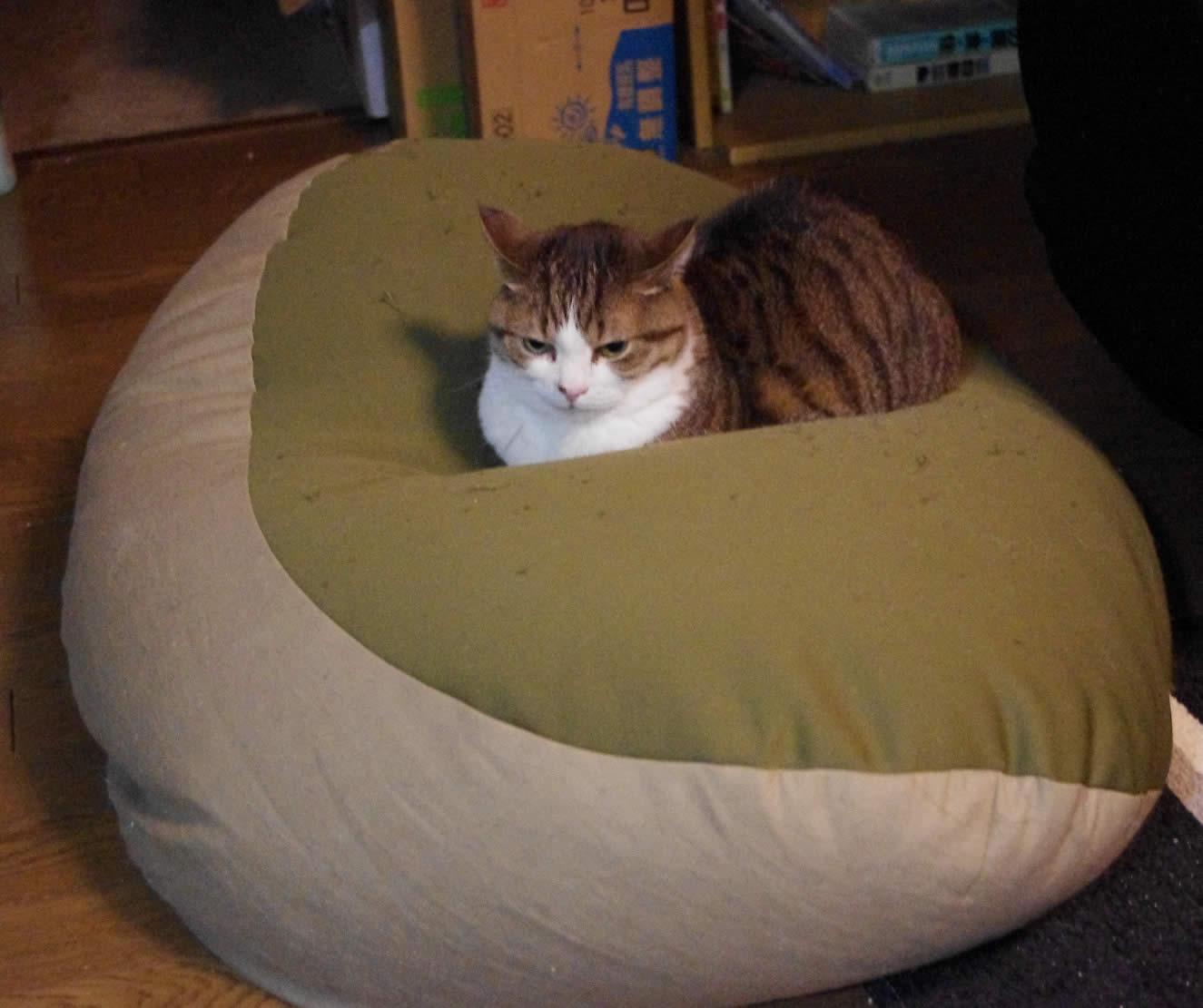 猫とPCケース 61台目 [無断転載禁止]©2ch.netYouTube動画>24本 ->画像>1078枚