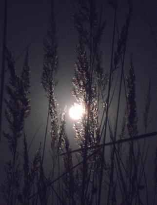 明月.jpg