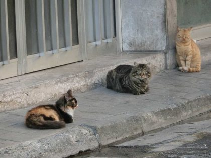 Nicosia_S_02 (640x480).jpg