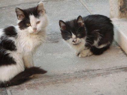 Nicosia_S_17 (640x480).jpg